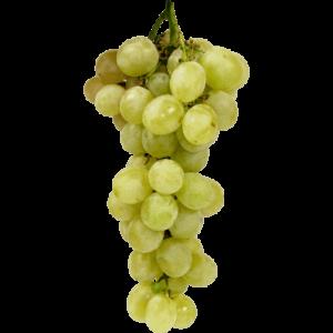 belo grozdje