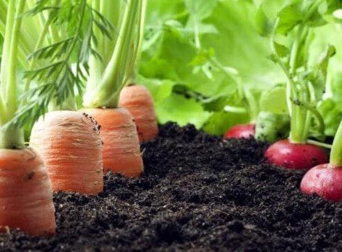 lokalno pridelana hrana
