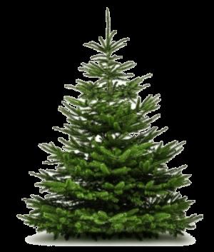 bozicno drevo 150cm