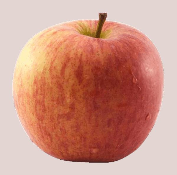 jabolka kiku